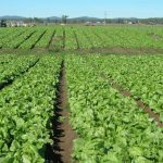 How to start a farm business in Nigeria