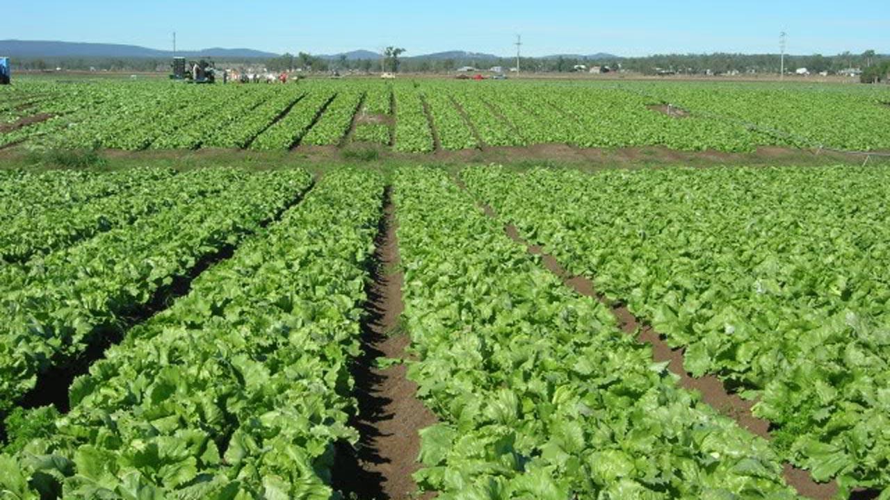 Farm business in Nigeria