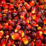 How to start palm oil business in Nigeria