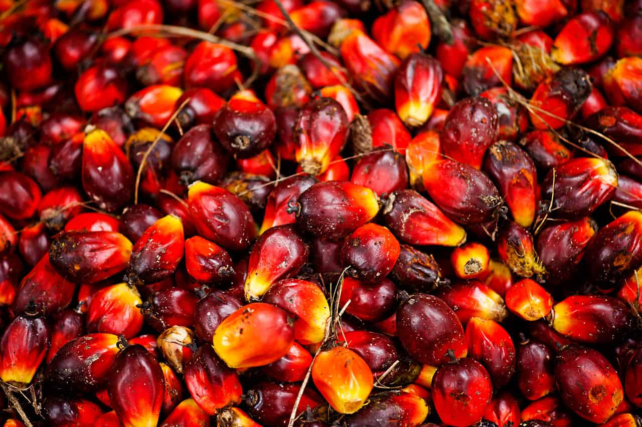 palm oil business