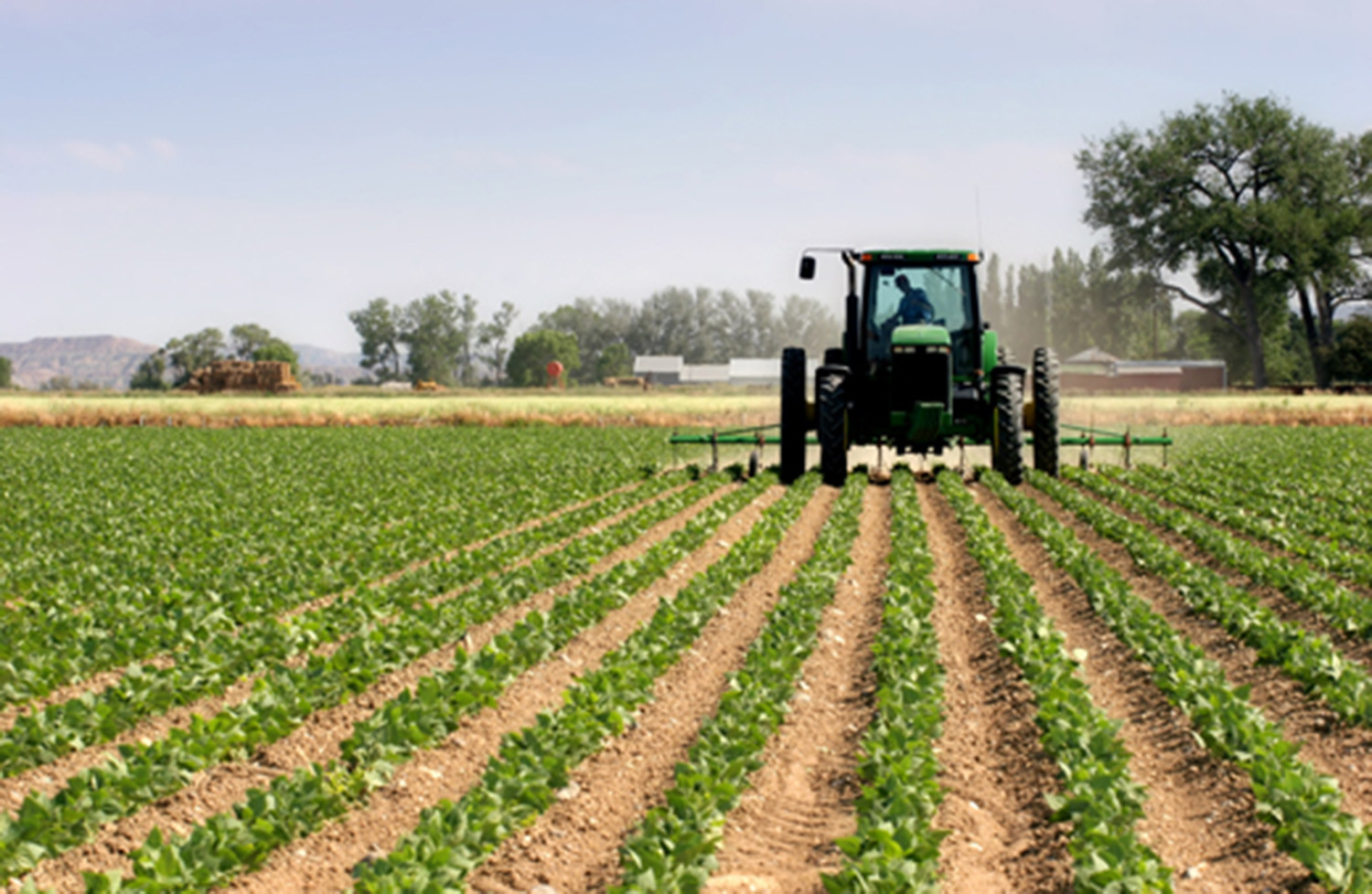 agriculture business ideas in Nigeria